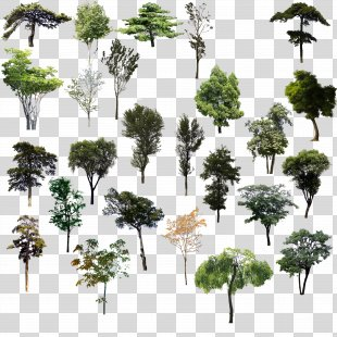 Tree Adobe Illustrator - Trees Psd Material PNG