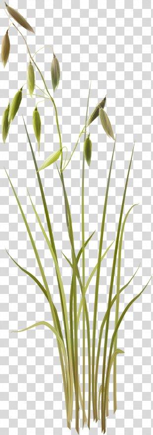 Grass Template Clip Art - Grass PNG