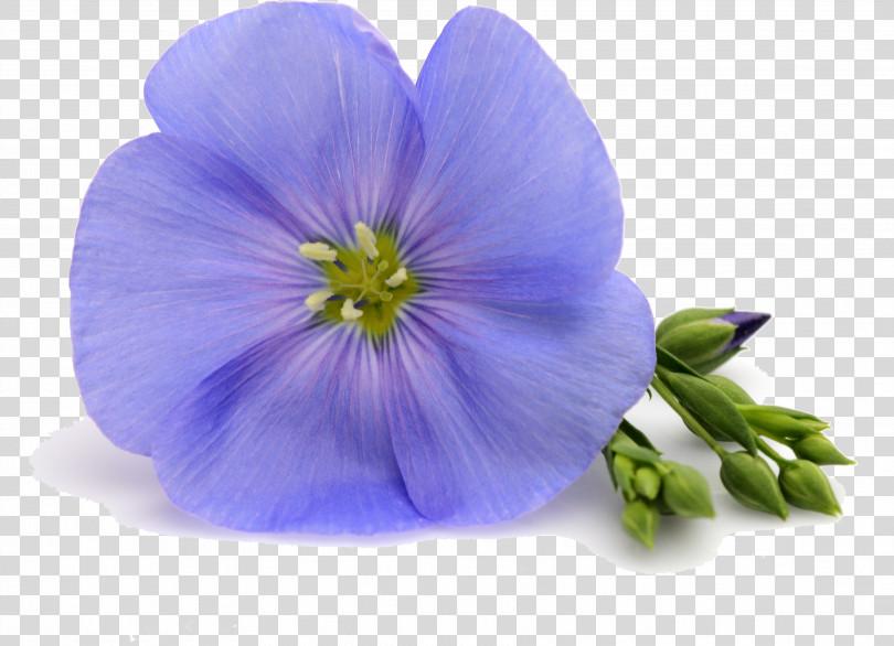 Flower Blue Petal Violet Purple PNG
