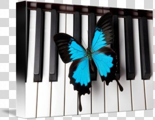 Piano Flower Dance Pianist Google Maps Business - Piano PNG
