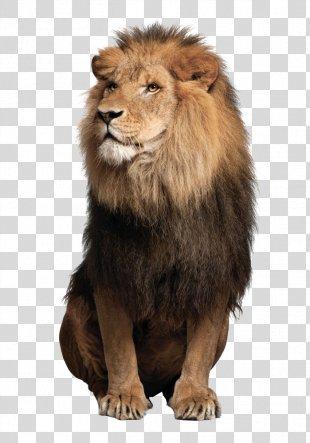 Sea Lion Leopard Jaguar Felidae - Lions Lions PNG