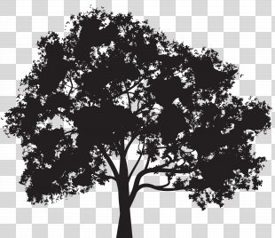 Silhouette Tree Clip Art - Tree Silhouette Clip Art Image PNG