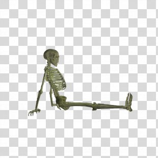 Skeleton Bone Fracture Skull - Skeleton PNG