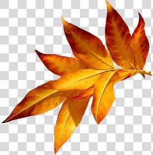 Autumn Leaves Maple Leaf Я, как осенний лист Abscission - Autumn Leaves PNG