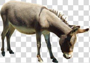 Donkey Aasi Horse - Donkey PNG