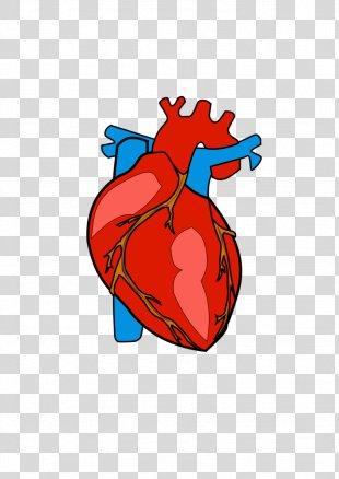 Heart Anatomy Clip Art - Human Heart PNG