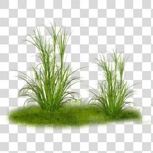 Grass Tree Clip Art - Grass PNG