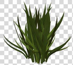 Grass Clip Art - Grass PNG