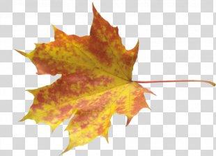 Autumn Leaves Maple Leaf - Autumn Leaves PNG