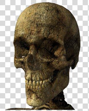 Skeleton Skull Clip Art - Skeleton PNG