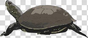 Green Sea Turtle Clip Art - Sea Turtle PNG