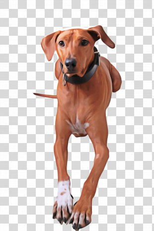 Cute Dog - Animal Sports Hunting Dog PNG