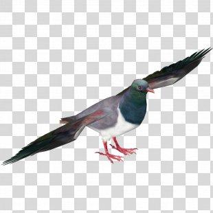 Pigeons And Doves New Zealand Pigeon Bird Racing Homer Pigeon Racing - Bird PNG