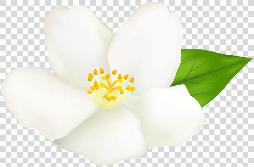 Clip Art Image Illustration Transparency, White Flower Clipart PNG