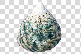 Seashell Restaurant Cockle Oyster Clip Art - Seashell PNG