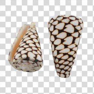Seashell Conus Marmoreus Cone Snails Conus Litteratus Conchology - Seashell PNG
