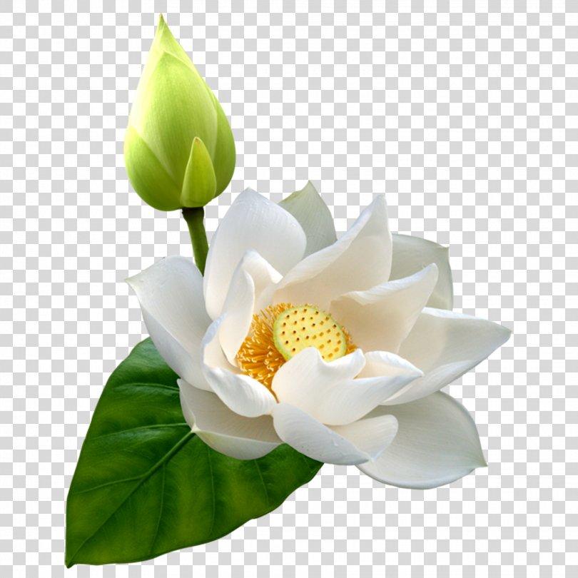Sacred Lotus Clip Art Image Vector Graphics, Lotus Flowers PNG