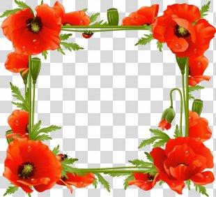 Common Poppy Picture Frames Flower - Flower Frame PNG
