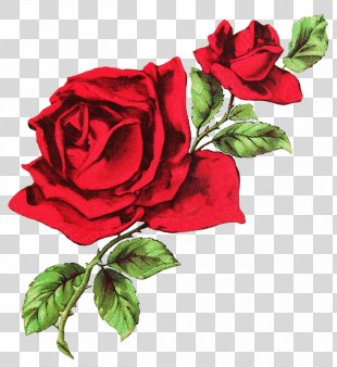 T-shirt Rose Drawing Flower Clip Art - Red Rose PNG