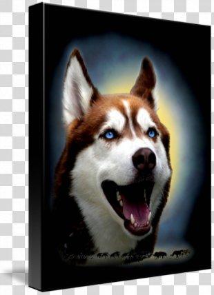 Siberian Husky Sakhalin Husky Alaskan Malamute Imagekind Dog Breed - Siberian Husky PNG