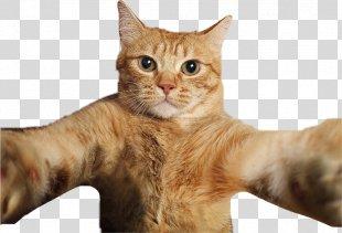 Cat Selfies Pet Photography - Cat PNG