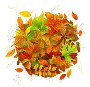 Autumn Leaves Leaf Maple - Autumn Leaves PNG