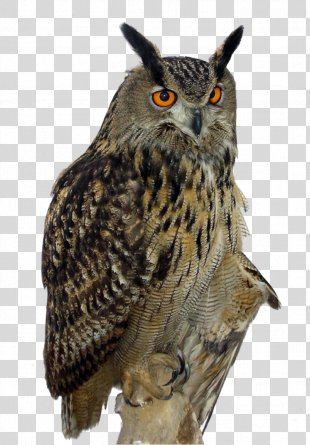 Owl High-definition Video Clip Art - Owl PNG