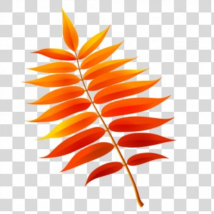 Autumn Leaves Leaf Drawing Image - Autumn Leaves PNG