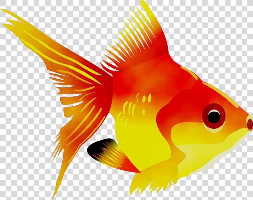 Sea Creatures Coloring Book Chamy, Color By Number Fish Coloring Book Goldfish PNG