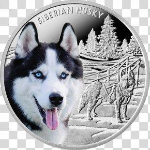 Siberian Husky Alaskan Malamute Puppy Alaskan Klee Kai Alaskan Husky - Siberian Husky PNG