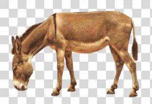 Donkey Horse Âne Aasi - Donkey PNG