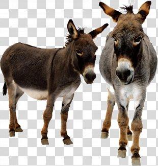 Donkey Animated Film - Donkey PNG