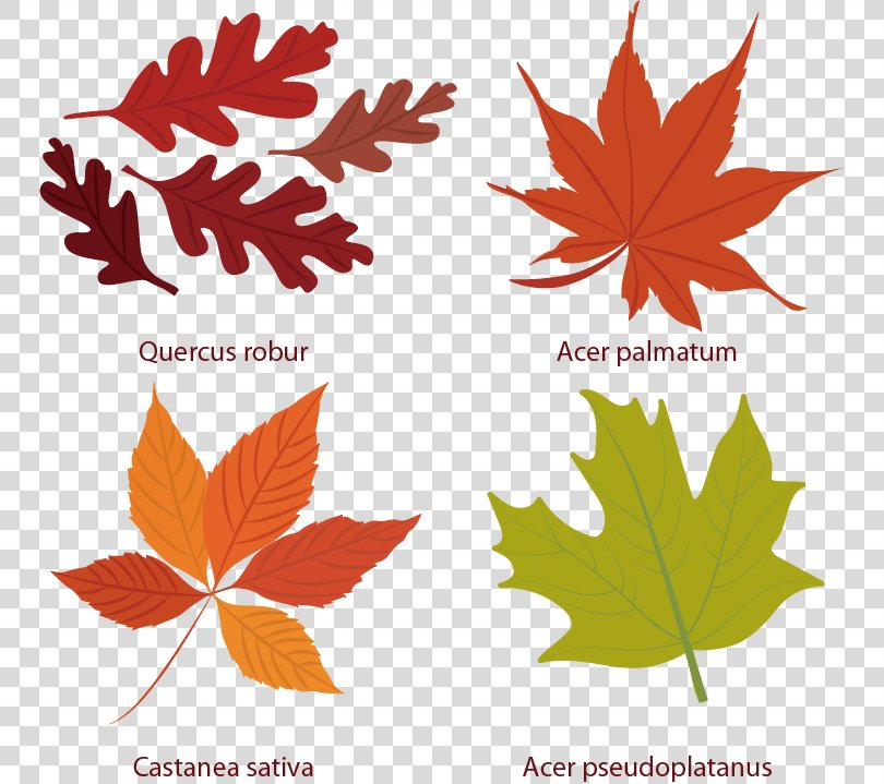 Euclidean Vector Leaf Autumn Icon, Maple Element Vector PNG