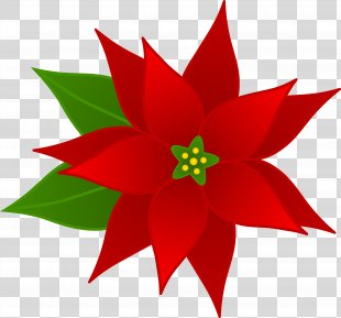 Holiday Christmas Free Content Clip Art - Poinsettia Flower Cliparts PNG