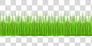 Grass Lawn Herbaceous Plant Garden - Grass PNG