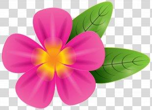 Frangipani Stock Photography Clip Art - Pink Tropic Flower Clip Art Image PNG