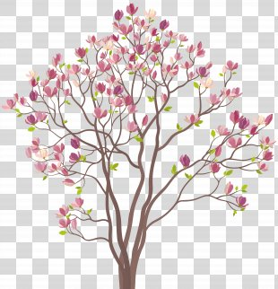 Southern Magnolia Tree Royalty-free Clip Art - Mmagnolia Tree Clip Art Image PNG