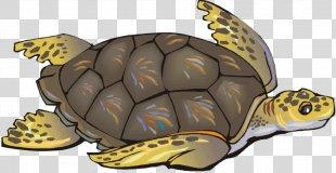Green Sea Turtle Reptile Clip Art - Sea Turtle Cliparts PNG