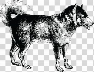 Siberian Husky Drawing Clip Art PNG