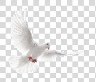 Columbidae Homing Pigeon Bird Fantail Pigeon Squab - Bird PNG