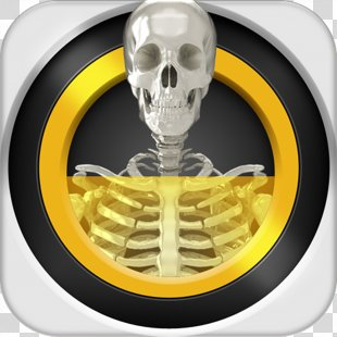 Real X-ray Scanner Simulator Backscatter X-ray Android - X-ray PNG