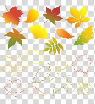 Autumn Leaves Autumn Leaf Color - Autumn Leaves PNG