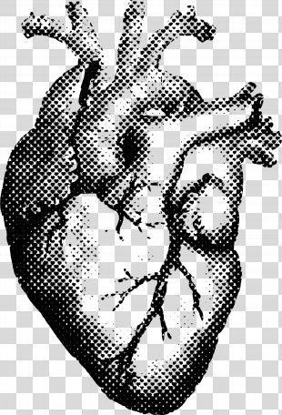 Heart Human Anatomy T-shirt Printing - Human Heart PNG