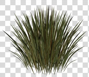 Grass Herbaceous Plant Meadow Lawn Kocaeli Province - Grass PNG