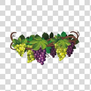 Wine Common Grape Vine The Fox And The Grapes Euclidean Vector - Delicious Grapes PNG