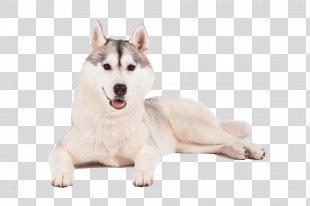 Miniature Siberian Husky Sakhalin Husky Alaskan Klee Kai Canadian Eskimo Dog - Siberian Husky PNG