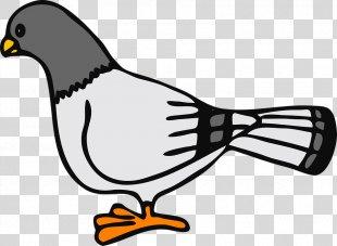 English Carrier Pigeon Columbidae Homing Pigeon Bird Clip Art - Pigeons Vector PNG