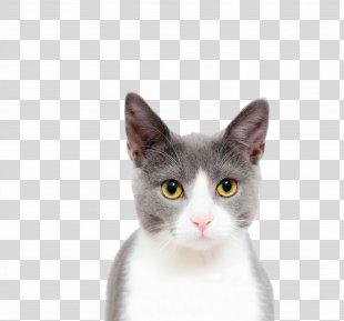 Cat Kitten Dog Felidae - Cat PNG