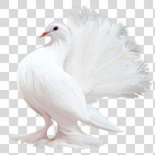 Homing Pigeon Bird Columbidae Tourterelle Colombe - Pigeon PNG