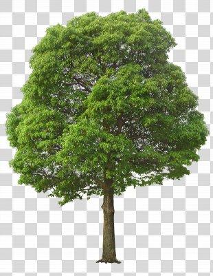 Tree Clip Art - Lush Tree PNG